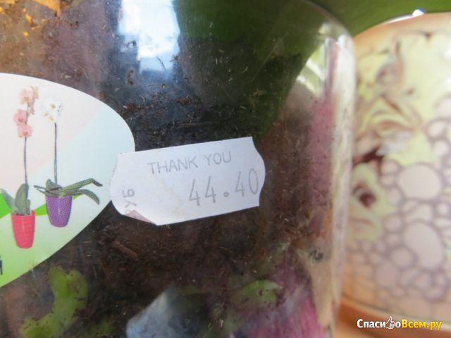 Вазон Алеана «Орхидея» 12*14 фото