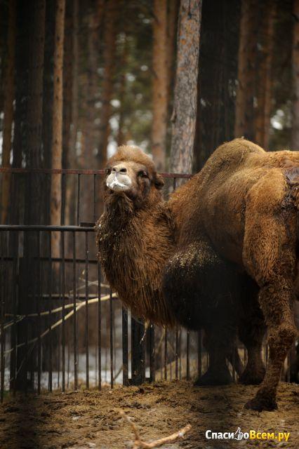 Новосибирский зоопарк (Новосибирск, ул. Тимирязева, д. 71/1)