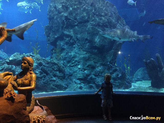 Океанариум Siam Ocean World (Бангкок, Таиланд) фото