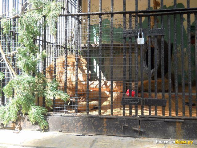 Ленинградский зоопарк (Санкт-Петербург, Александровский парк, д. 1) фото