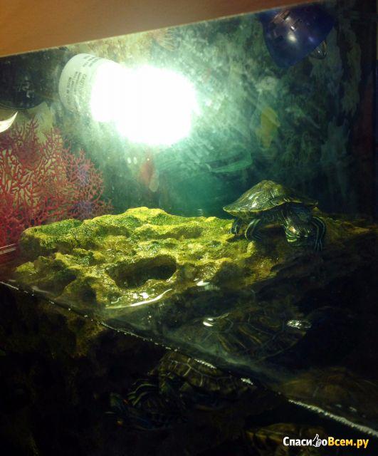 """Лампа для тропического террариума Reptile UVB 100 """"Hagen"""" Exo Terra 13W PT2186 фото"""