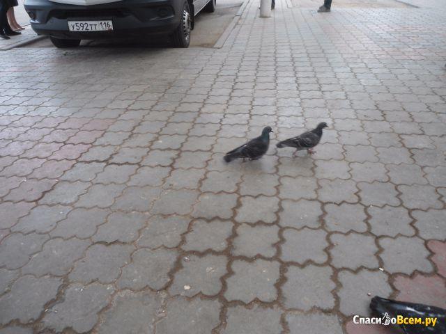 Автовокзал города Альметьевск (Россия, Татарстан) фото