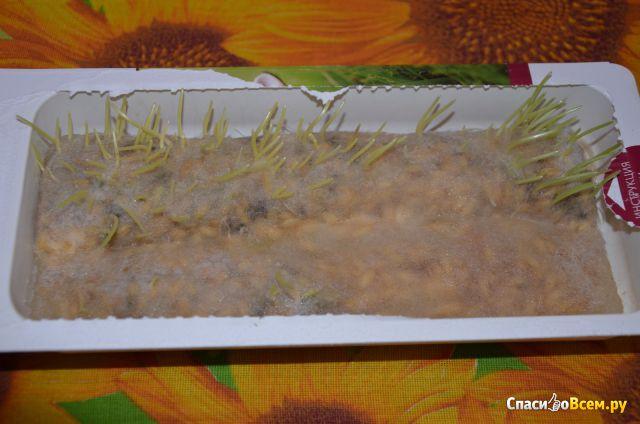 Трава для кошек Titbit Лакомый кусочек фото