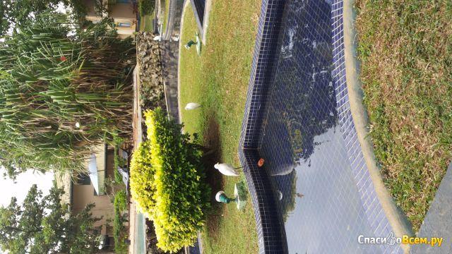 Отель Villa ocean view 3* (Ваддува, Шри-Ланка) фото