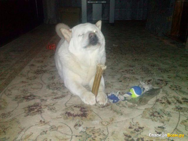 Узловые кости Titbit с курицей для собак фото