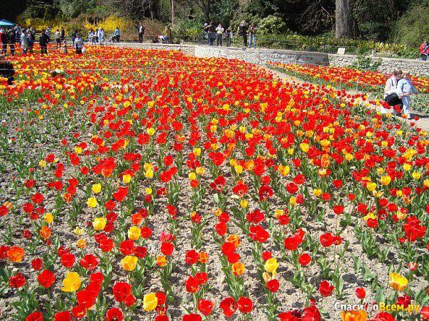 Никитский ботанический сад (Крым, Ялта, п. Никита) фото