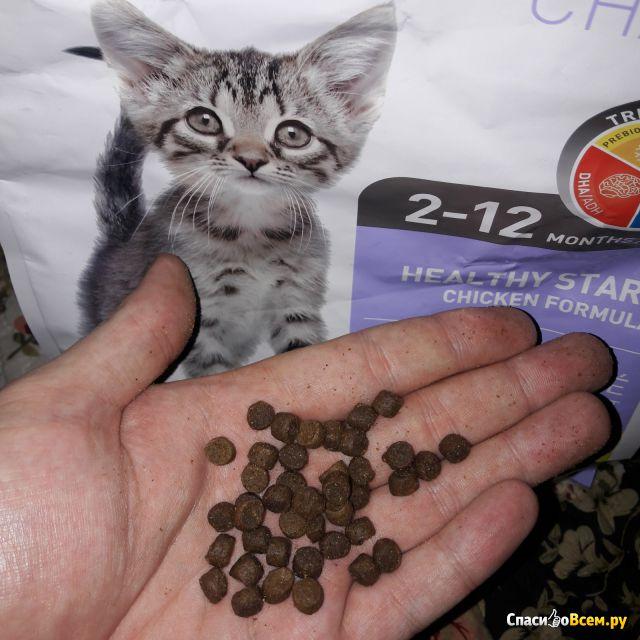 Сухой корм для котят 1st Choice «Здоровый старт» 2-12 месяцев с курицей фото