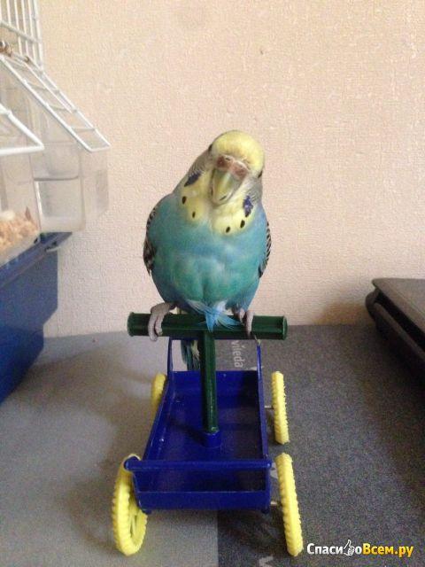 Полноценное питание для маленьких попугаев Cocorite GrandMix Padovan фото