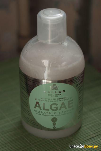 Шампунь Kallos Algae с экстрактом водорослей и оливковым маслом фото