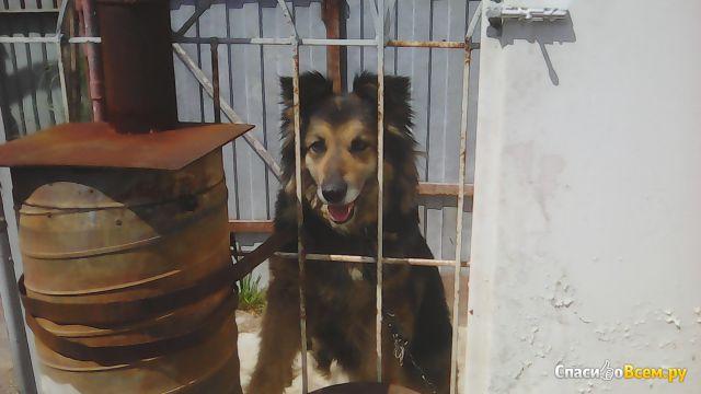 Беспородная собака фото