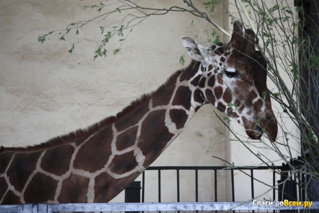 Калининградский зоопарк (Калининград, пр-т Мира, 26) фото