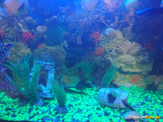 Двусторонний фон для аквариума Marina ClearView #11778 фото