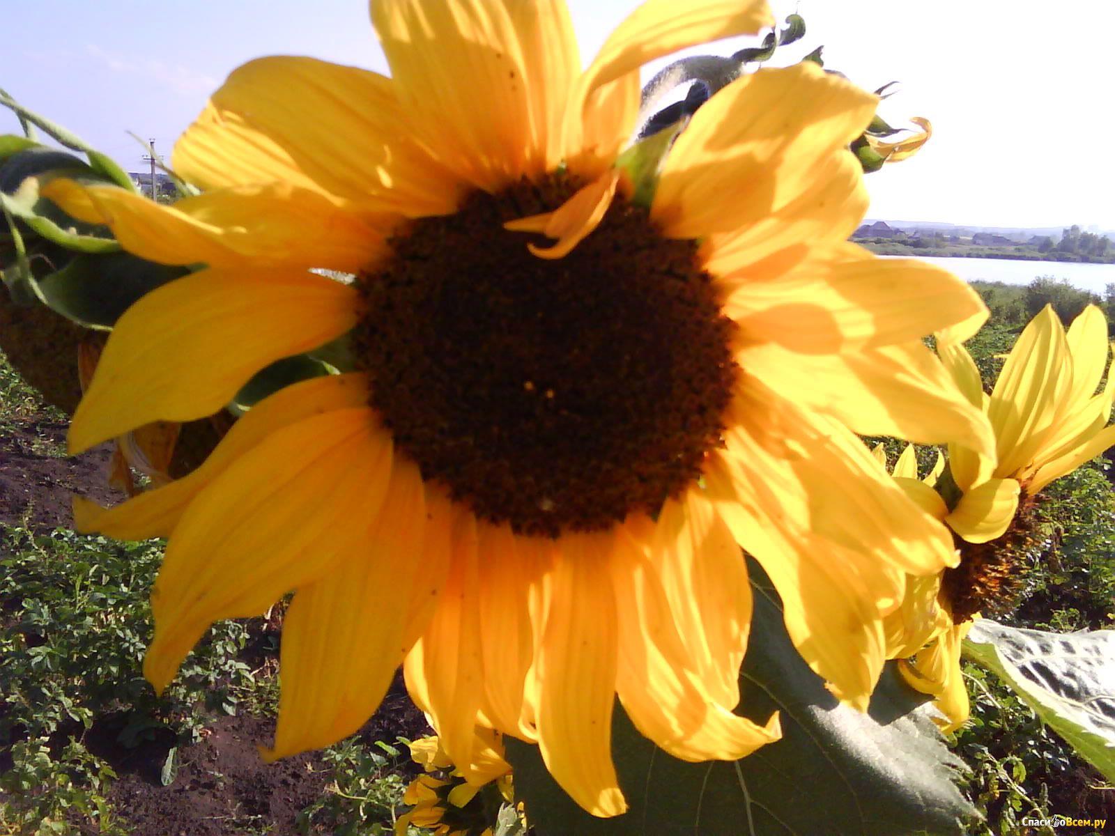 Есть косточками цветы фото