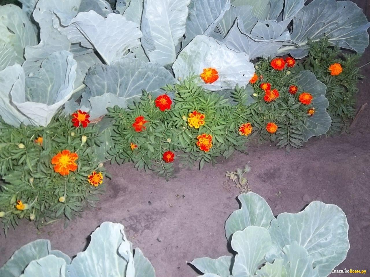 Посадка цветов под зиму - Сад и огород 19