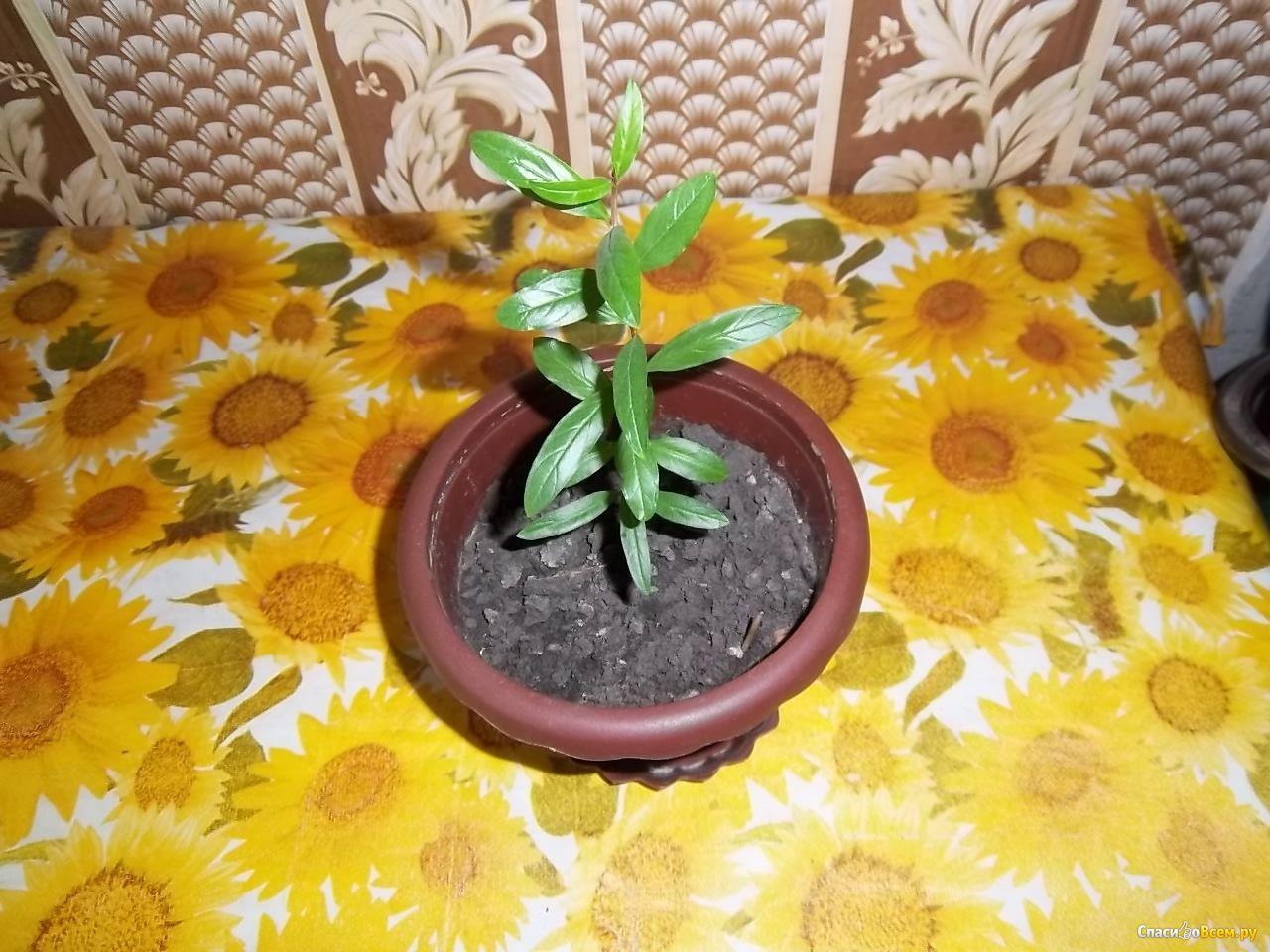 Цвет листьев водяной лилии фото фото