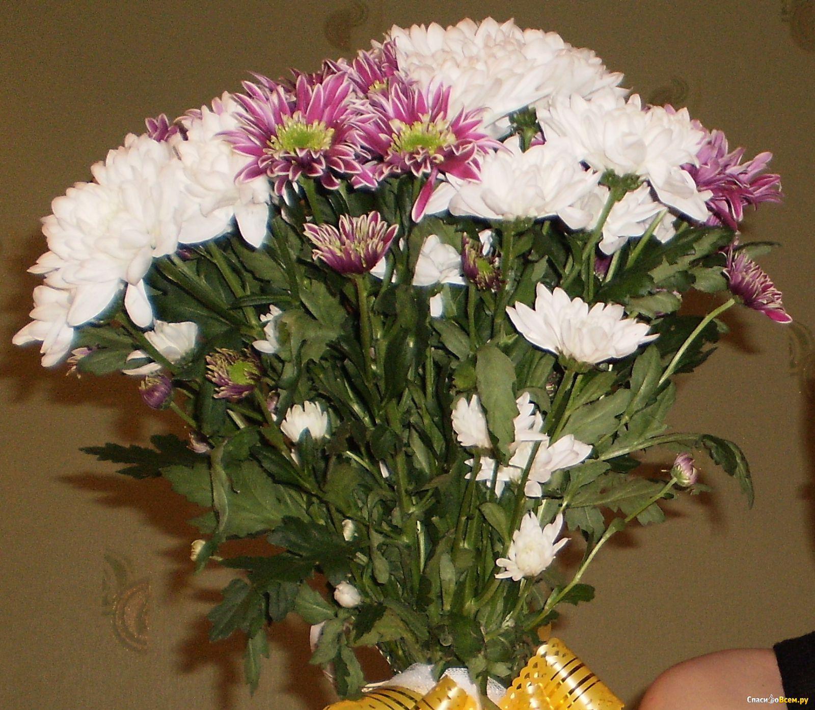 Букет хризантем цветов фото