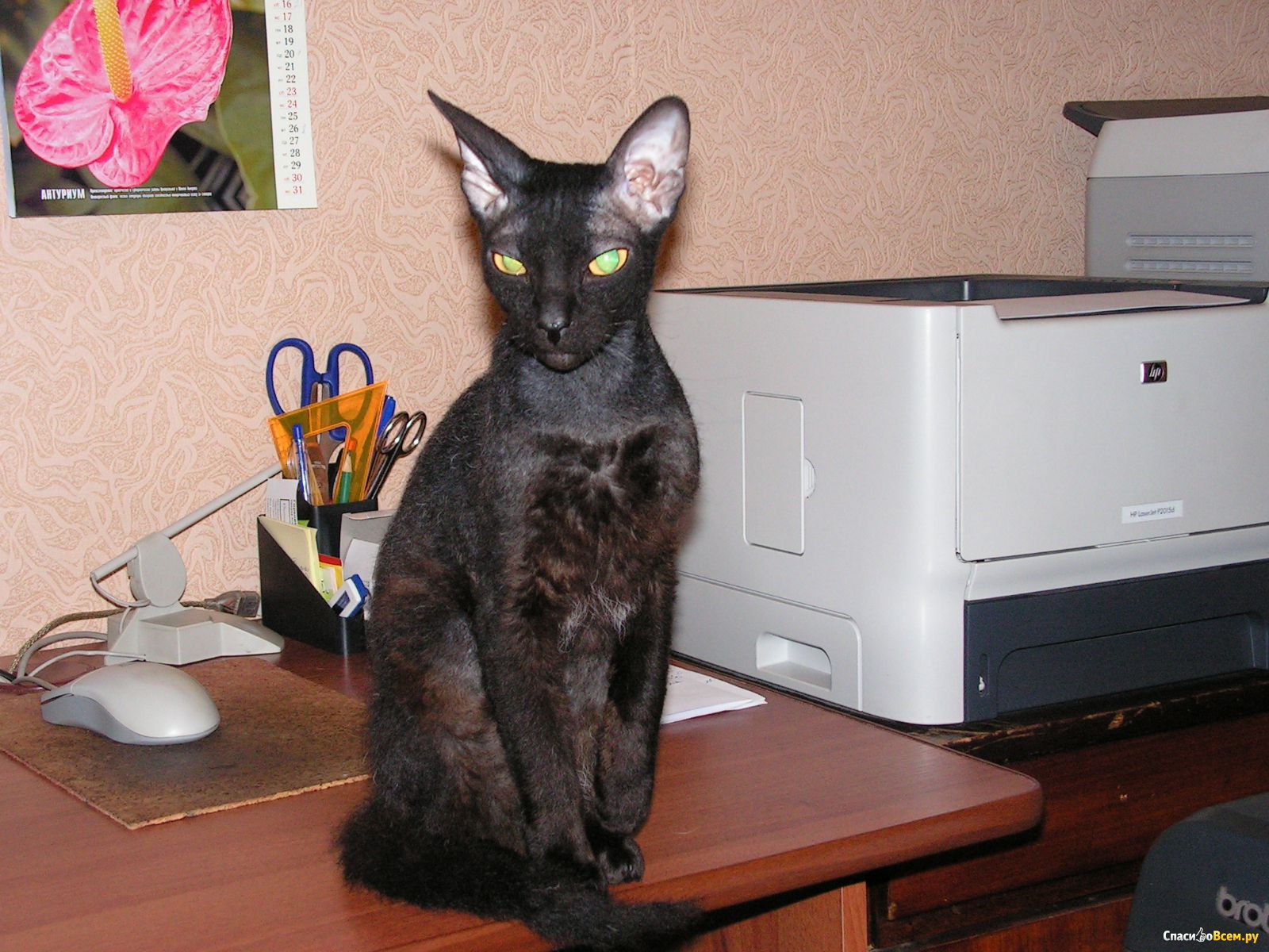 Фото котов в домашних условиях 154