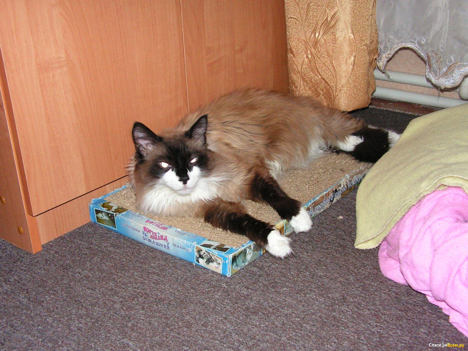 Фото котенка в домашних условиях