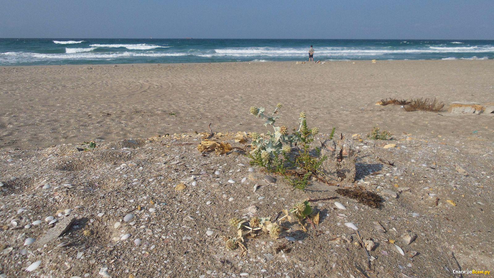Поселок мирный фото пляжа и