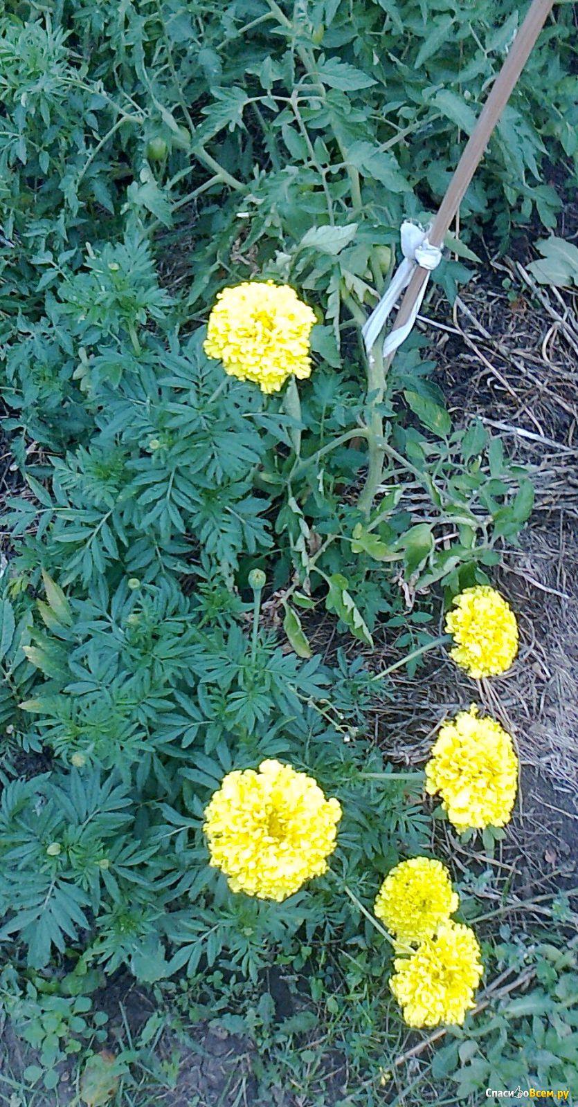 Посадка цветов под зиму - Сад и огород 24