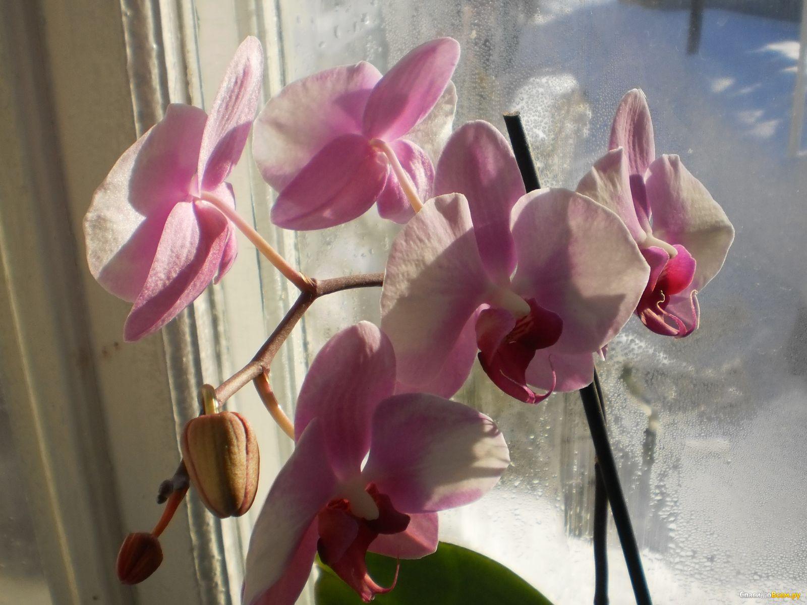Орхидея отцвела что дальше делать фото