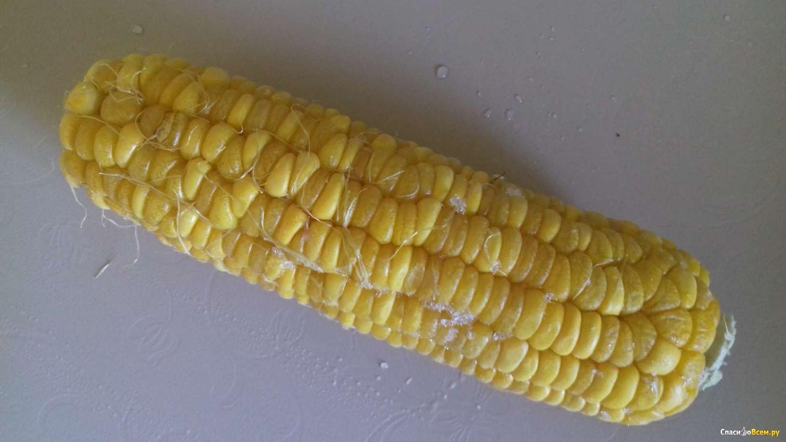 Как получить семена кукурузы в домашних условиях: отбор, сбор, хранение 68