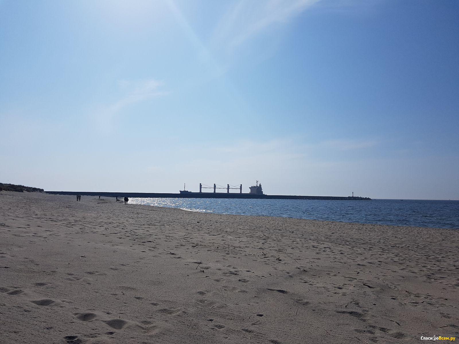 пляжи в балтийске фото домашних животных
