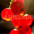 asmusdish
