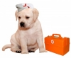 Городская служба по профилактике и лечению болезней животных (Новосибирск, ул. Дачная, 62)