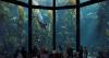 Океанариум Монтерей-Бей (США, Калифорния, Монтерей)