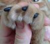 """Силиконовые накладки на когти для кошек """"Sweetie Pet"""" Anleo"""
