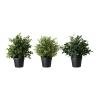 Искусственное растение в горшке, травы, различные растения Фейка IKEA