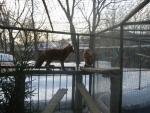 Животные Московского Зоопарка