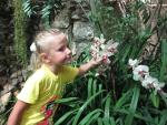 Оранжерея с орхидеями в ботаническом саду