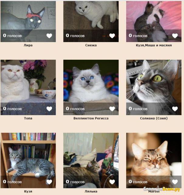 Конкурс на радио дачи про кошек