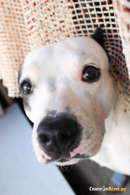 Противопаразитарные средства таблетки Bayer Дронтал плюс для собак со вкусом мяса фото