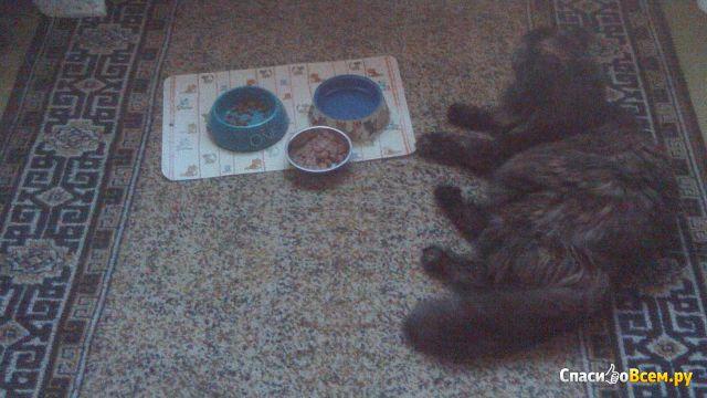 Корм консервированный для котят с нежной телятиной в соусе Timely фото