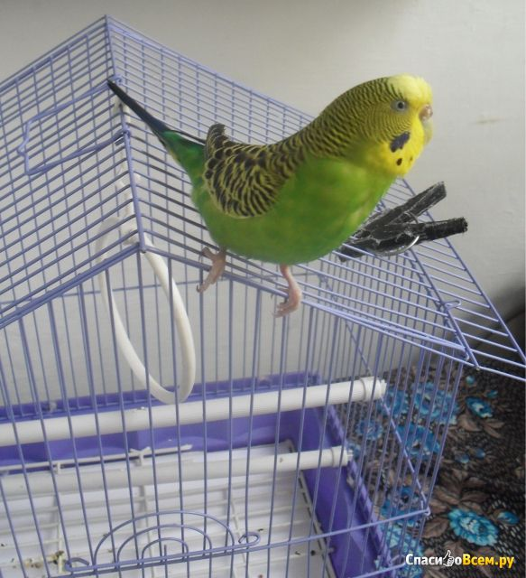 Фото домика для волнистых попугаев