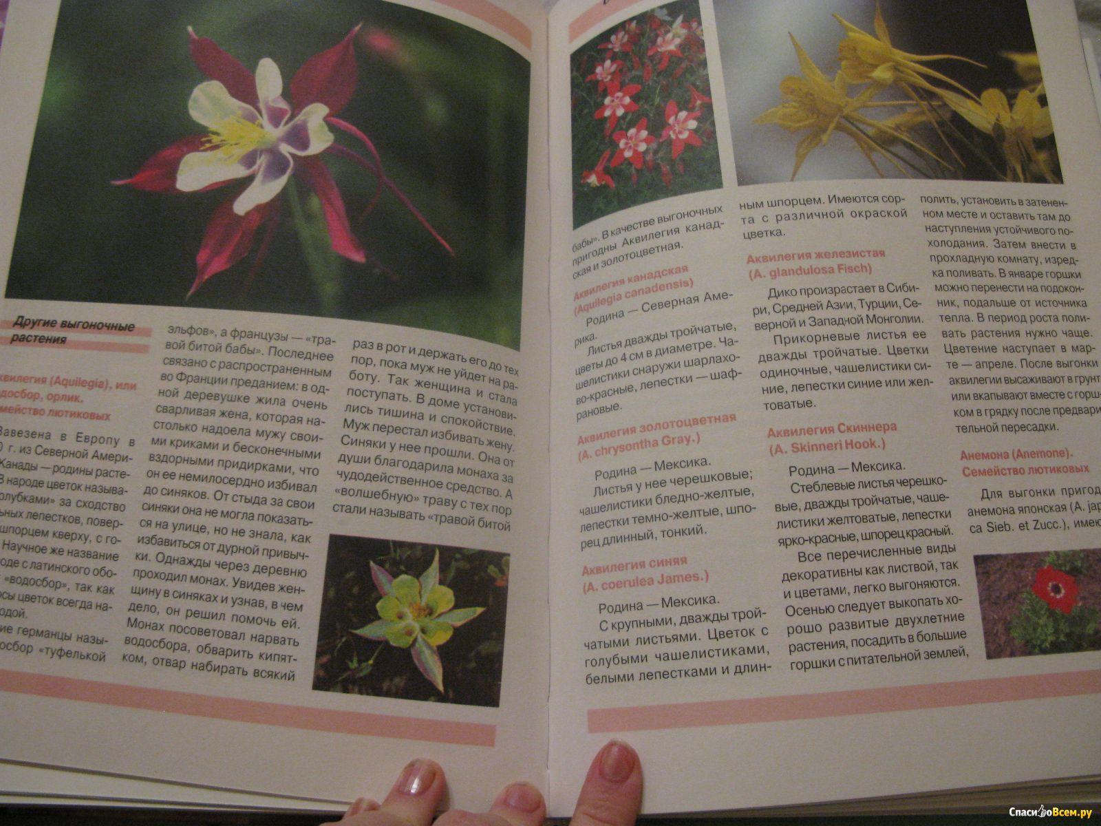 абзаково каменный цветок фото и описание