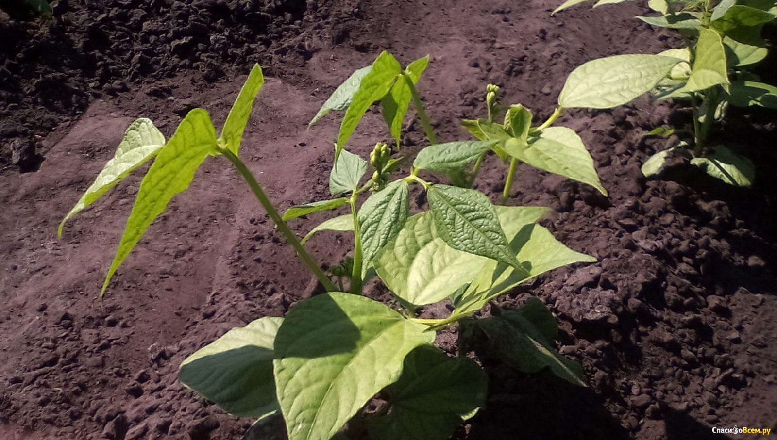 Как из ведра картошки получить десять: советы огородникам 94