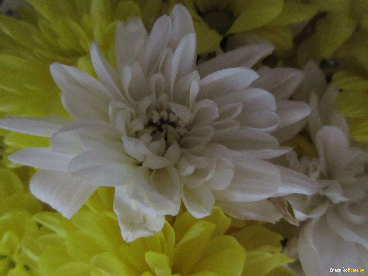 украшения золотые фото с цветами