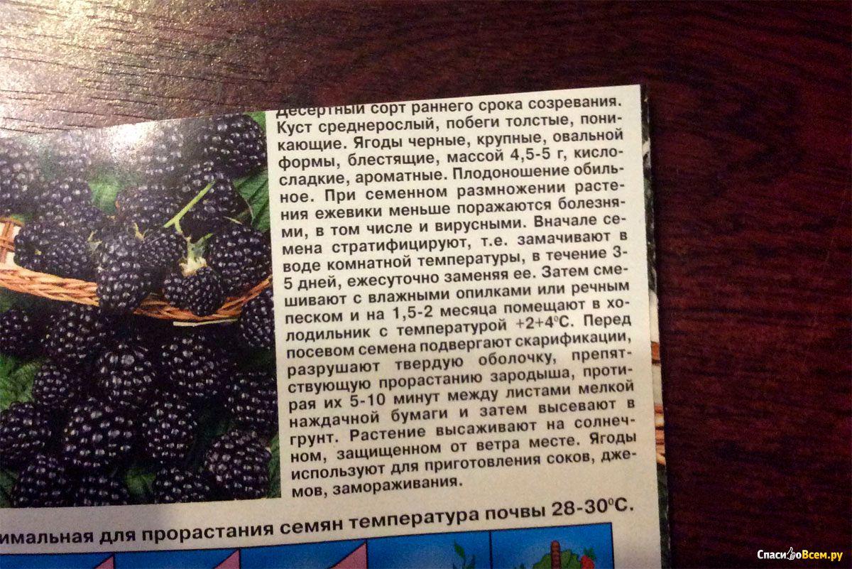 Ежевика садовая гибридная