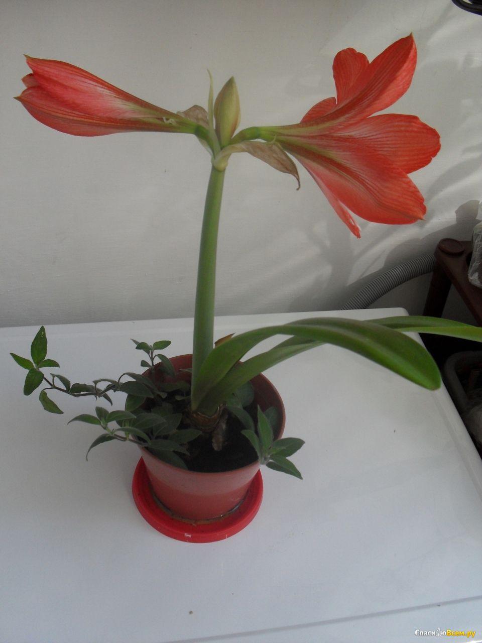Фото комнатных цветов с названием для скорпиона